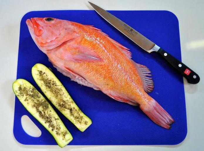 Описание морского окуня: его места обитания, польза и вред вкусной рыбы, рецепты приготовления
