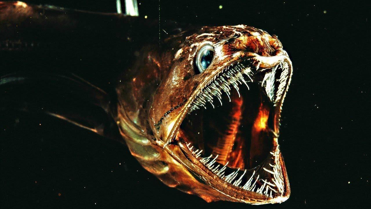 Список речных иозерных рыб