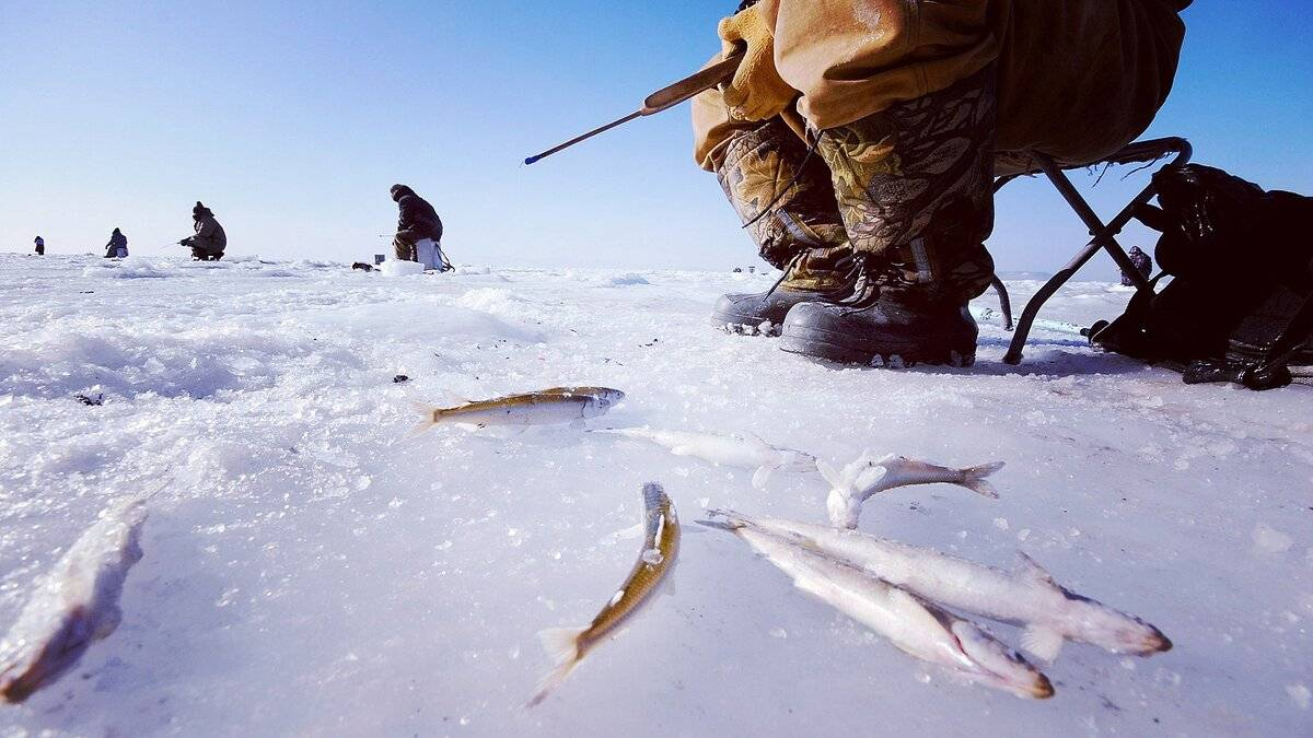 Ловля уклейки в зимний период