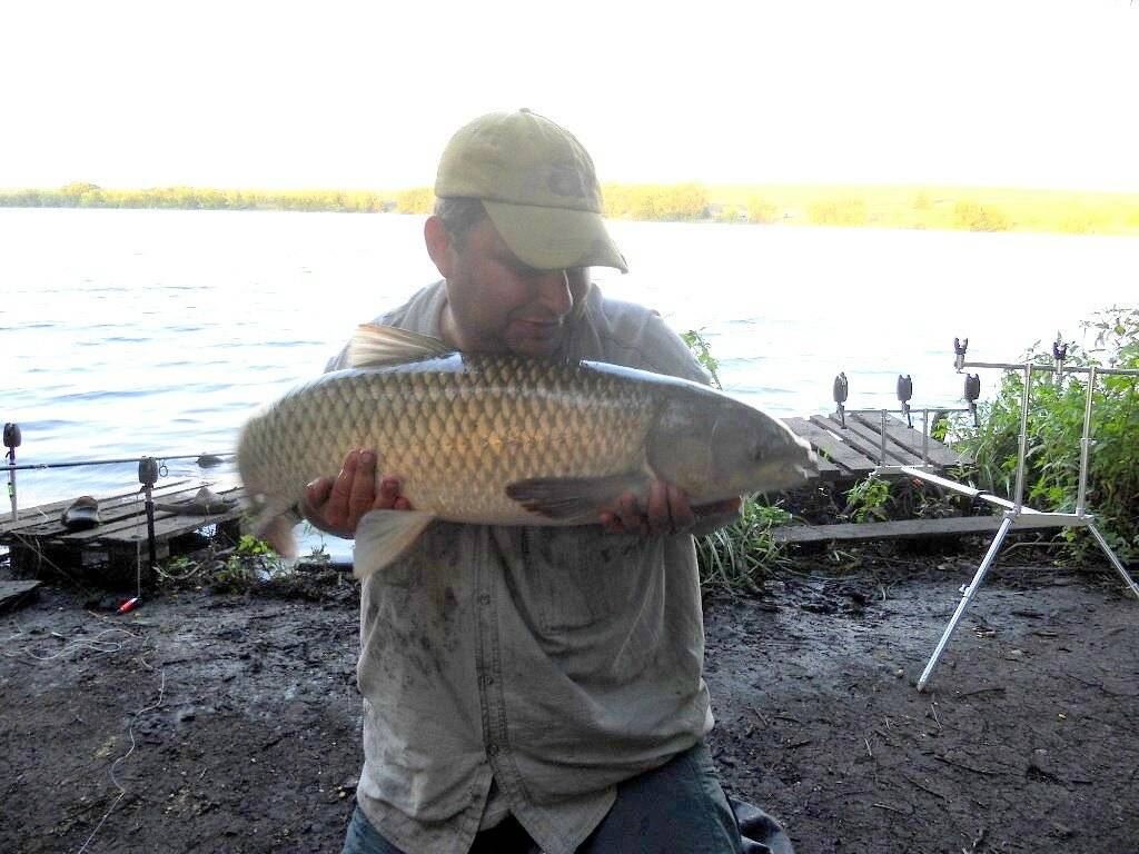 Ловля белого амура ранней весной - снасти, особенности и советы - на рыбалке!