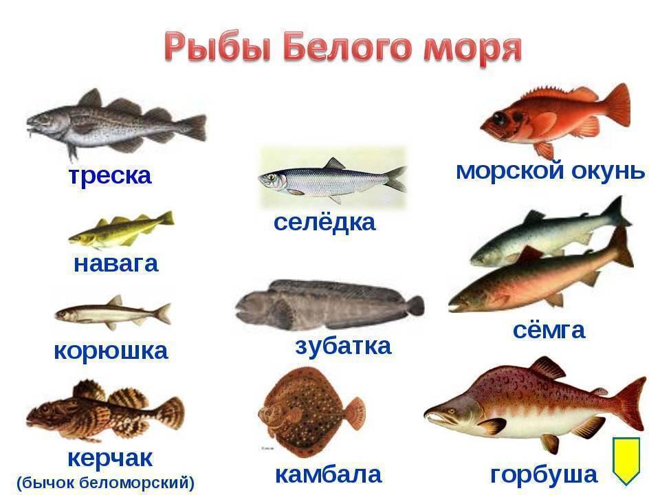 Список речных и озерных рыб
