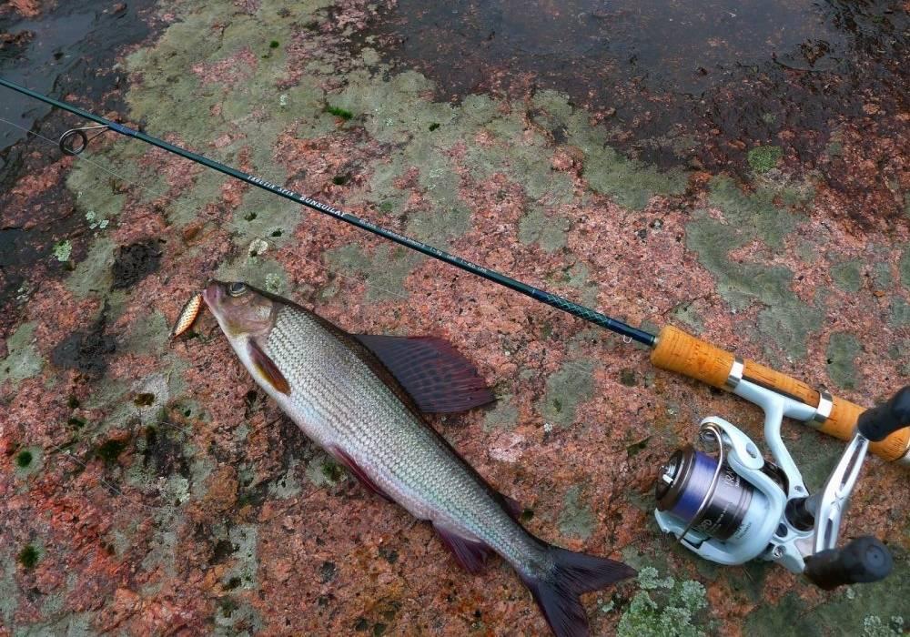 Рыба посуху не ходит, рыбалка на хариуса нахлыстом