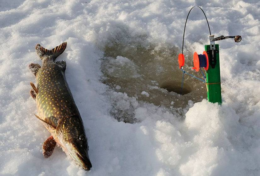 Плавающая жерлица - варианты и оснастка для рыбалки