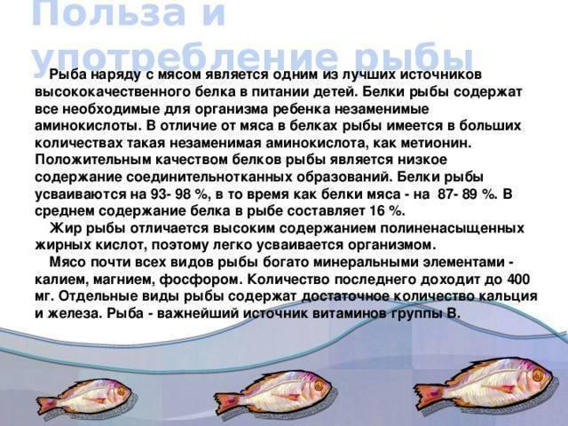 Путассу: состав, калорийность, бжу, польза и вред для организма, рецепты рыбных блюд