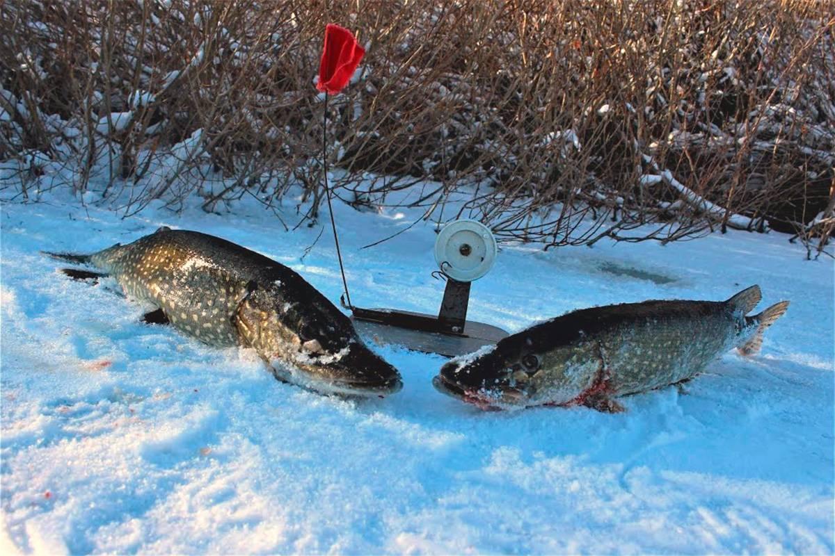 Ловля щуки зимой на жерлицы - тактика и места рыбалки