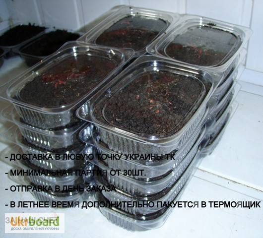 Как подготовить червей к зимовке в холодное время | ворми ферма