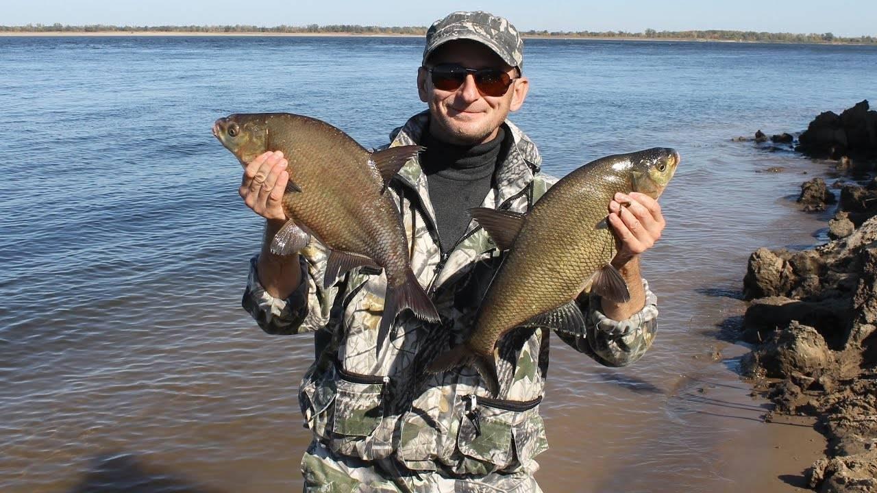 Рыбалка в трехречье летом: ахтубинский сазан на жмых (макуху) - рыбалка на ахтубе с комфортом - база трёхречье