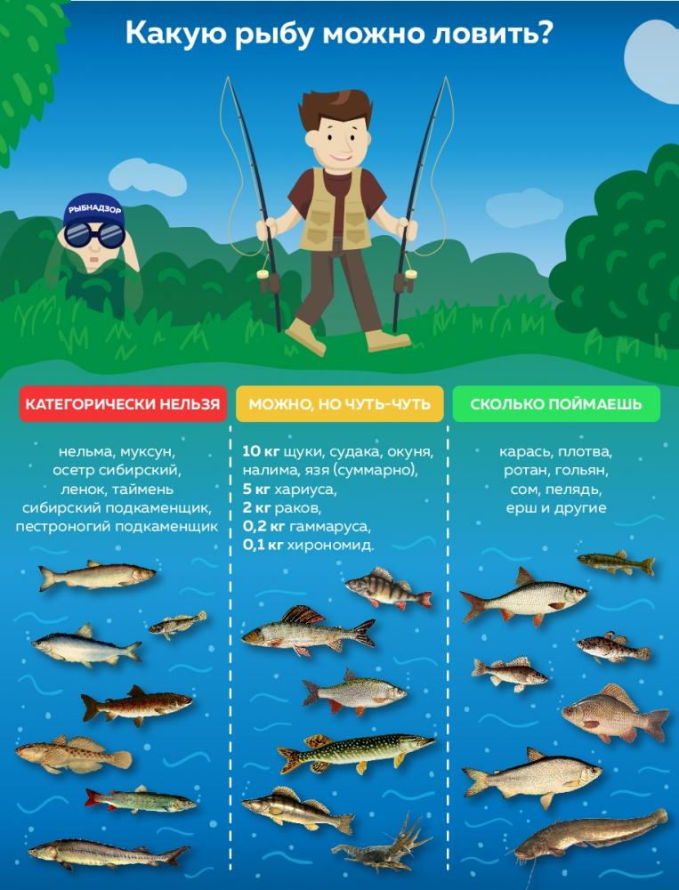 Закон о рыбалке в россии. штрафы, правила, запреты