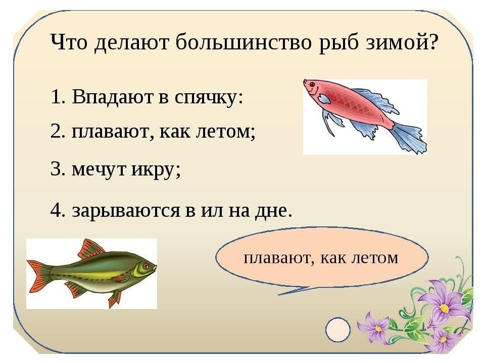 Как спят рыбы в аквариуме ночью и днем, впадают ли в спячку, как выглядят спящие рыбы (фото)?