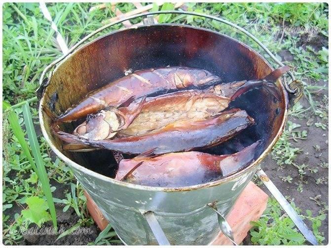 Рыба в коптильне холодного копчения
