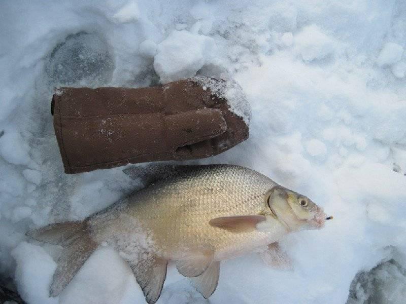Ловля леща зимой: фото, необычные насадки для рыбалки, на что поймать крупную добычу со льда, в глухозимье, в палатке, на водохранилище, как это сделать в феврале?