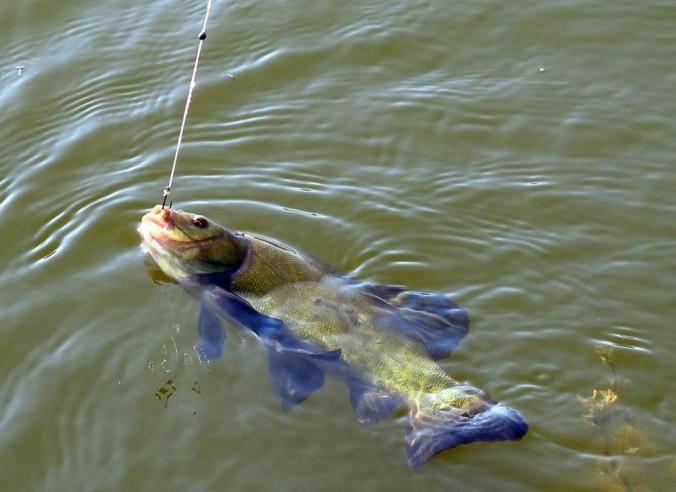 Где, в каких водоемах ловить линя?