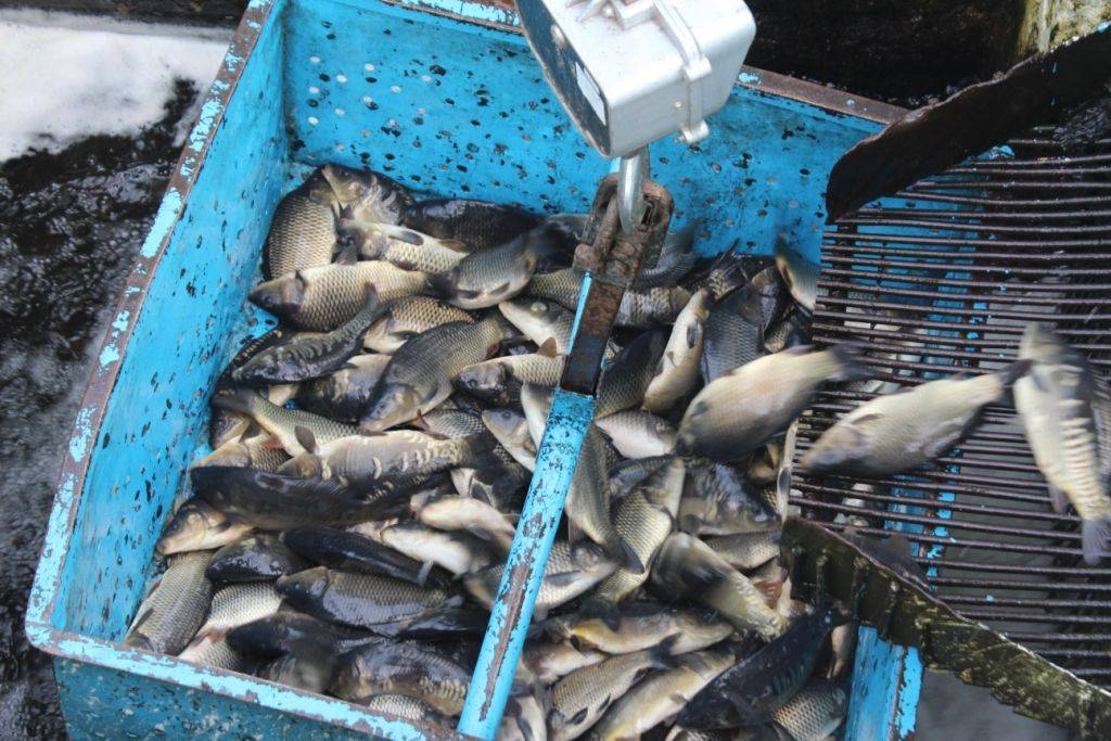 Подводные сообщества: как рыбы-санитары поддерживают чистоту водоемов