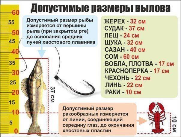 Сколько можно ловить раков на одного человека