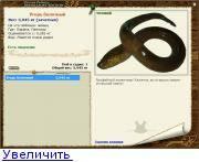 Загадочная рыба змея - угорь: где обитает и на что ловят. ангулас - малёк угря