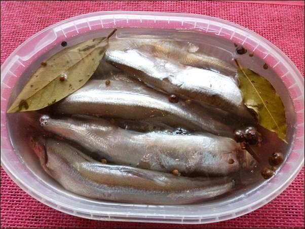Рассол для засолки рыбы: сколько дней солится в домашних условиях, рецепты для посола