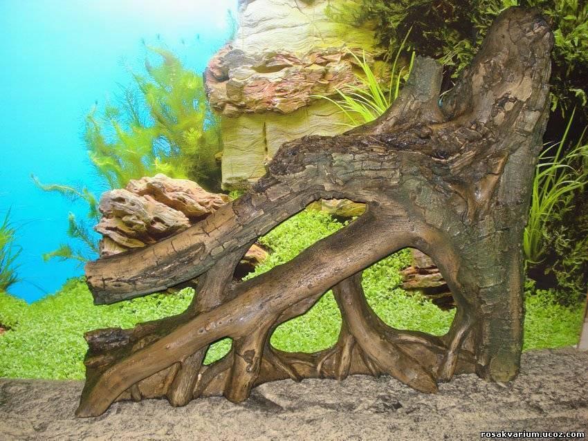Коряга в аквариум своими руками: выбор, подготовка и обработка подходящего дерева
