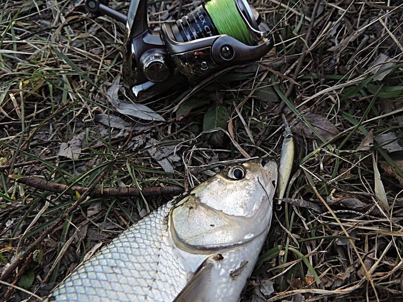 Ловля голавля: как ловить, на что клюет, приманки и прикормка, способы ловли