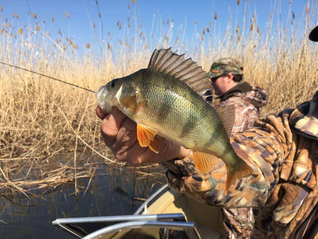 Рыбалка в одинцовском районе (одинцовский г.о.). форум