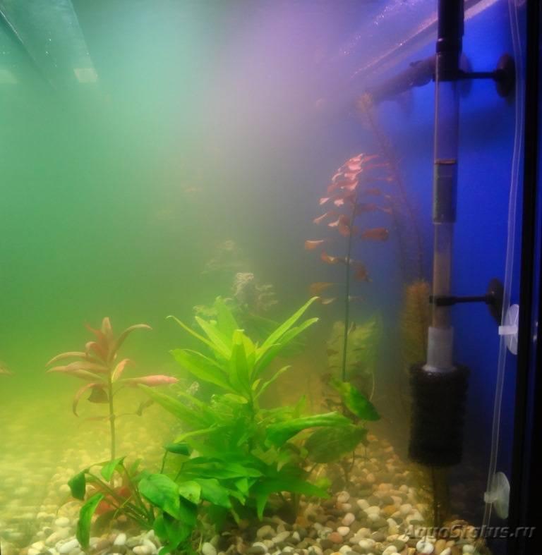 Мутная вода в аквариуме: что делать, как избавиться от зелени, причины цветения, биологическое равновесие искусственного водоема