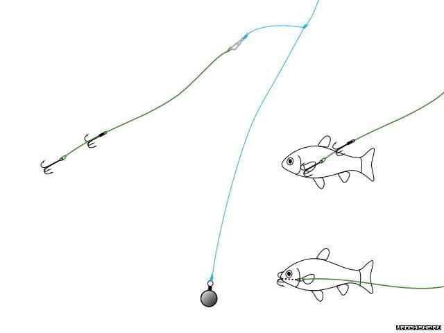 Ловля щуки на живца: как ловить с берега (летом, осенью), оснастка, насадки