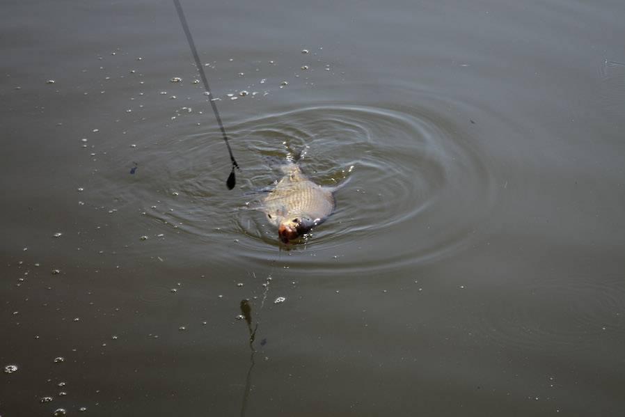 Ловля леща осенью: как различается рыбалка в октябре и ноябре