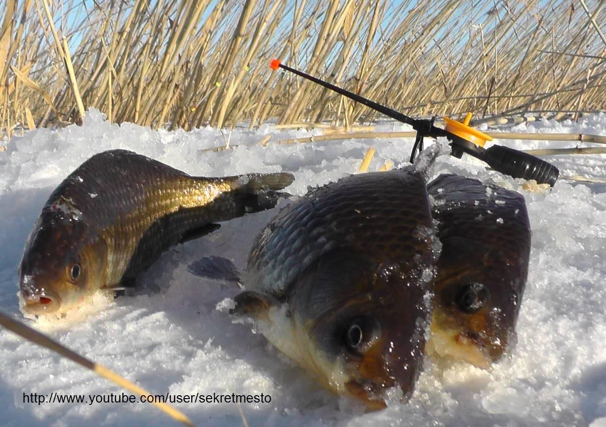 Как увеличить свой улов на летней рыбалке