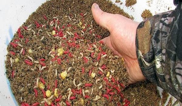 Прикормка для окуней - зимой, осенью, весной и летом, как её сделать своими руками? лучшие рецепты