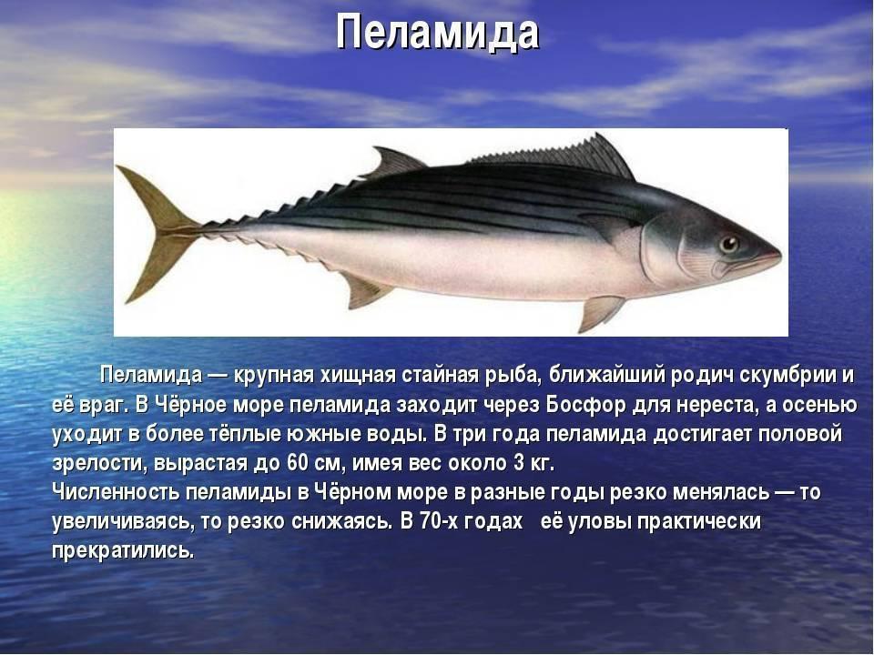 Кумжа: описание рыбы, места обитания и образ жизни, снасти и техника ловли кумжи