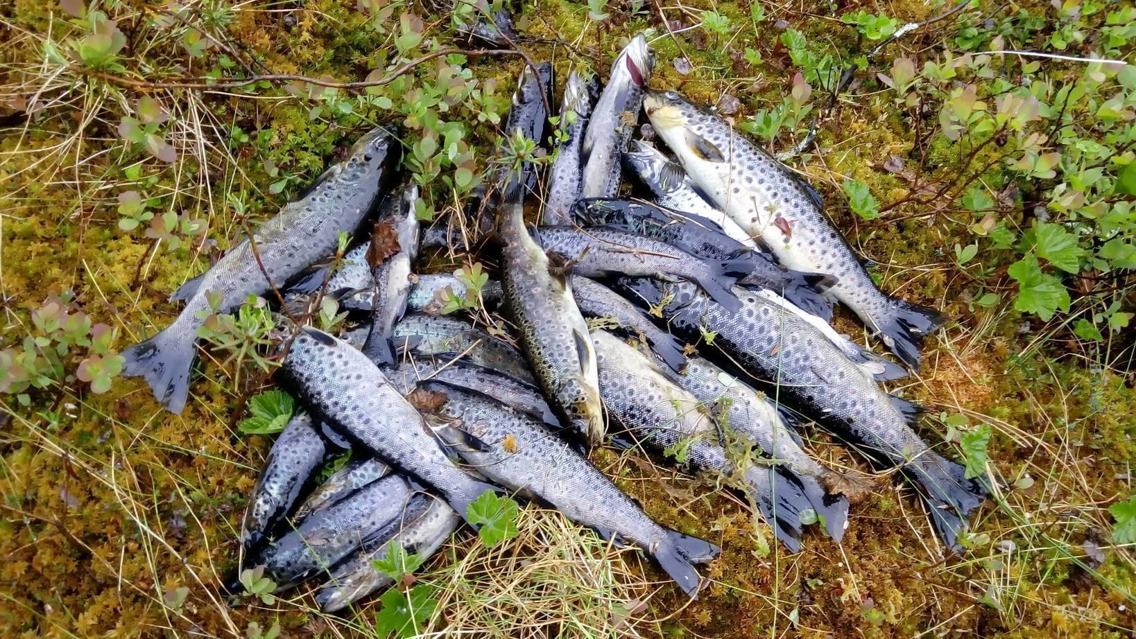 Ильмень (озеро): отдых, рыбалка и отзывы туристов