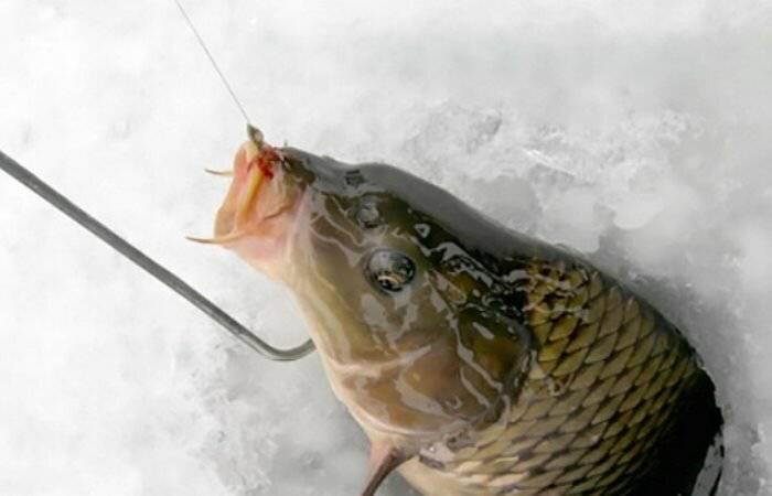 Ловля сазана: выбор места, приманки и времени ловли - рыбачок!сайт рыбачок