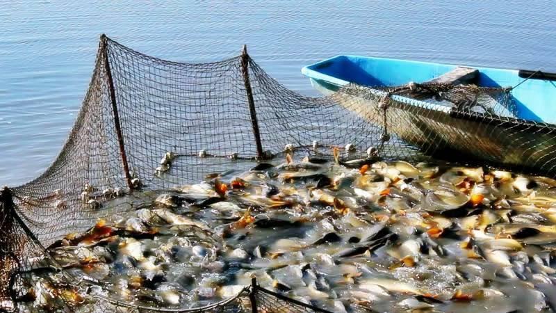 Как ловить ерша: особенности рыба, основные способы ловли