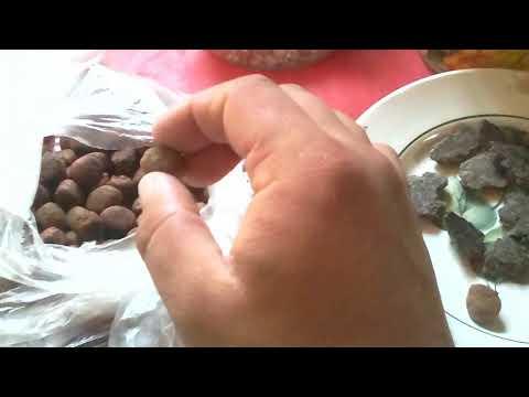 Ловля карпа на бойлы: оснастка, монтаж, рецепты в 2019 году