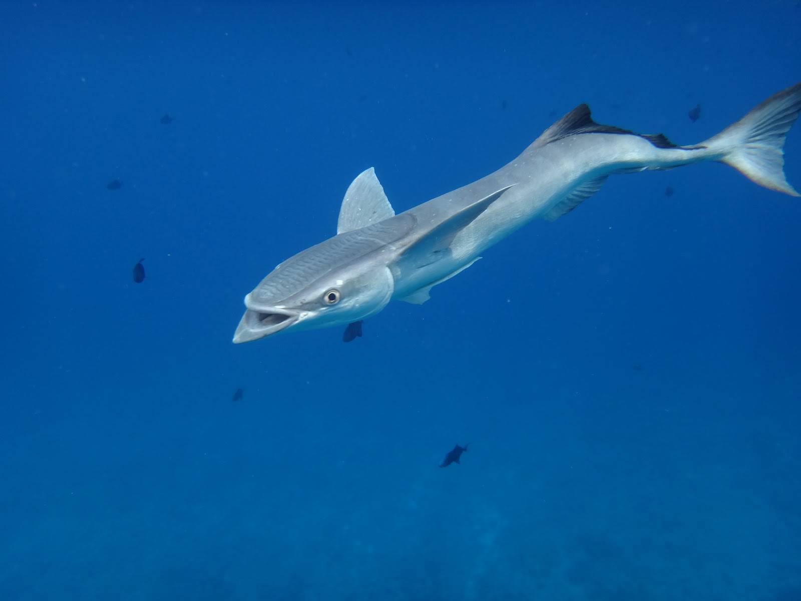 Белая рыба: список названий видов и их подробное описание