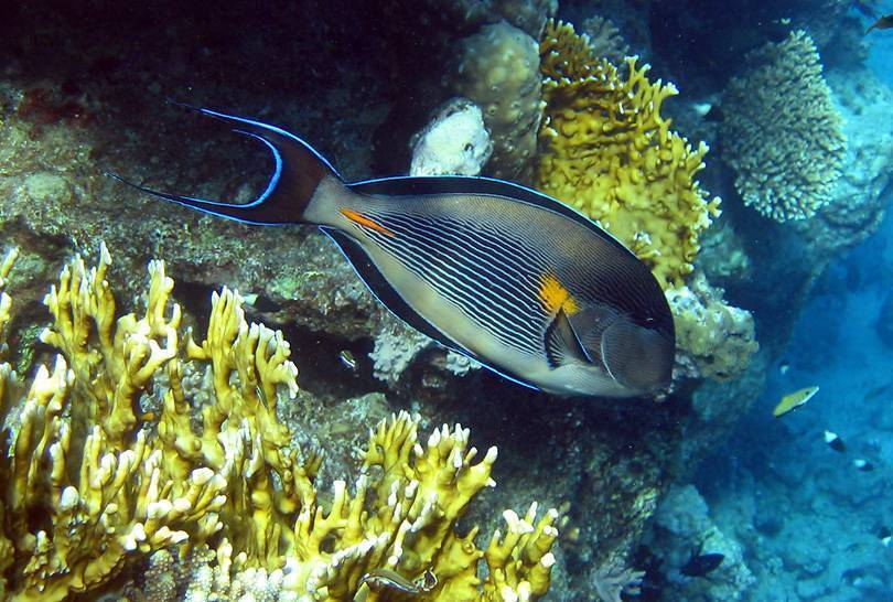 Рыбы черного моря – фото, названия и описание | виды и список рыб черного моря