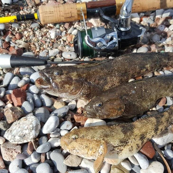 Допустимые размеры и суточная норма вылова рыбы на сегодня