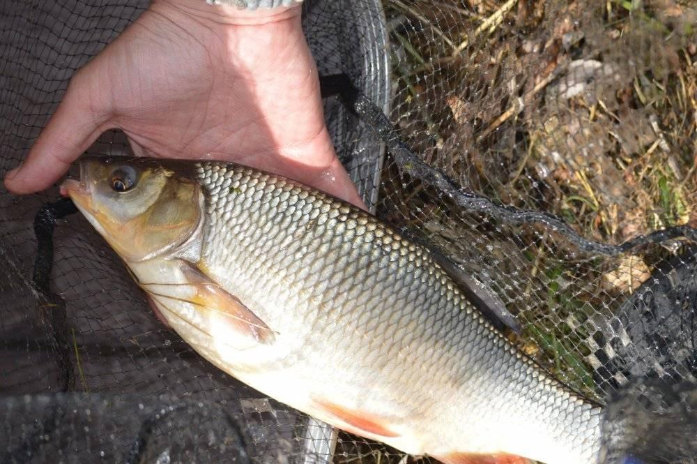 Рыбалка в кожевниковском районе