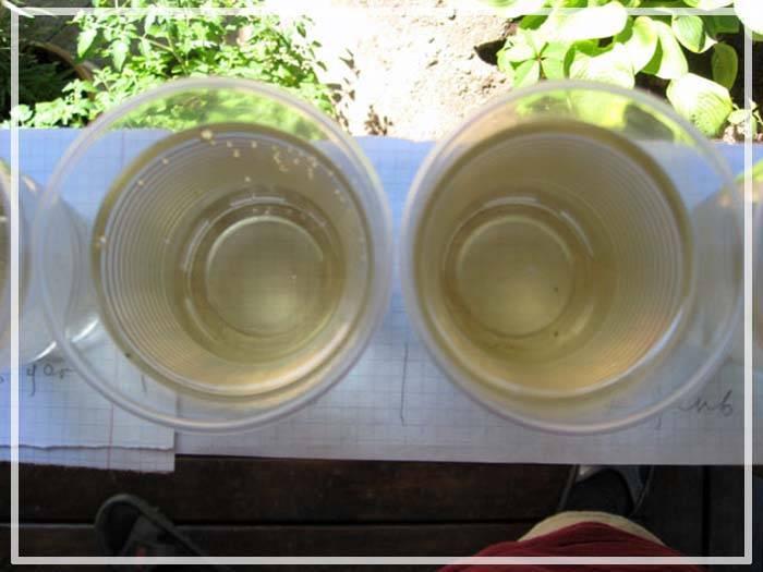 Топ-11 причин, почему воняет вода в аквариуме. что делать при появлении неприятного запаха?