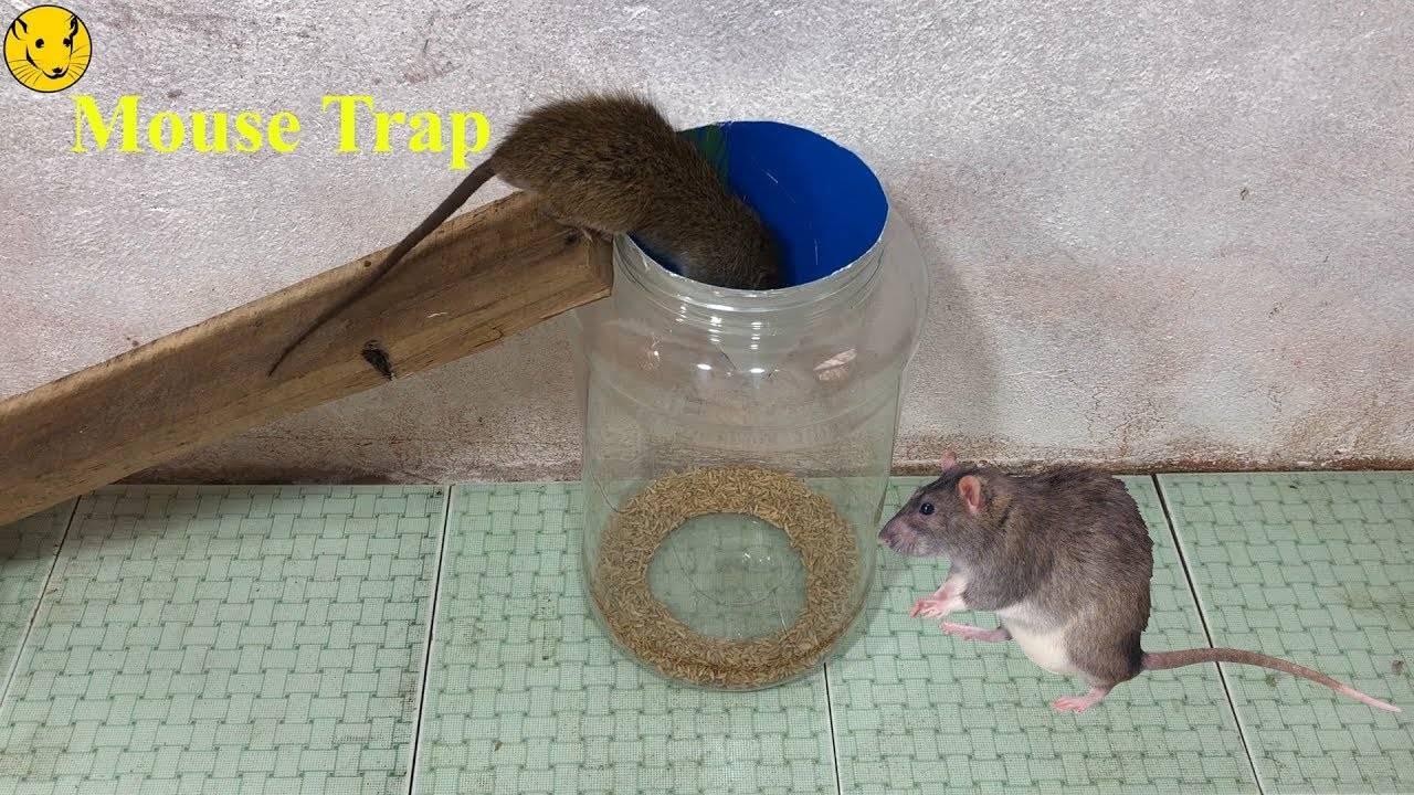 Как избавиться от мышей и крыс: 20 эффективных средств для борьбы в домашних условиях