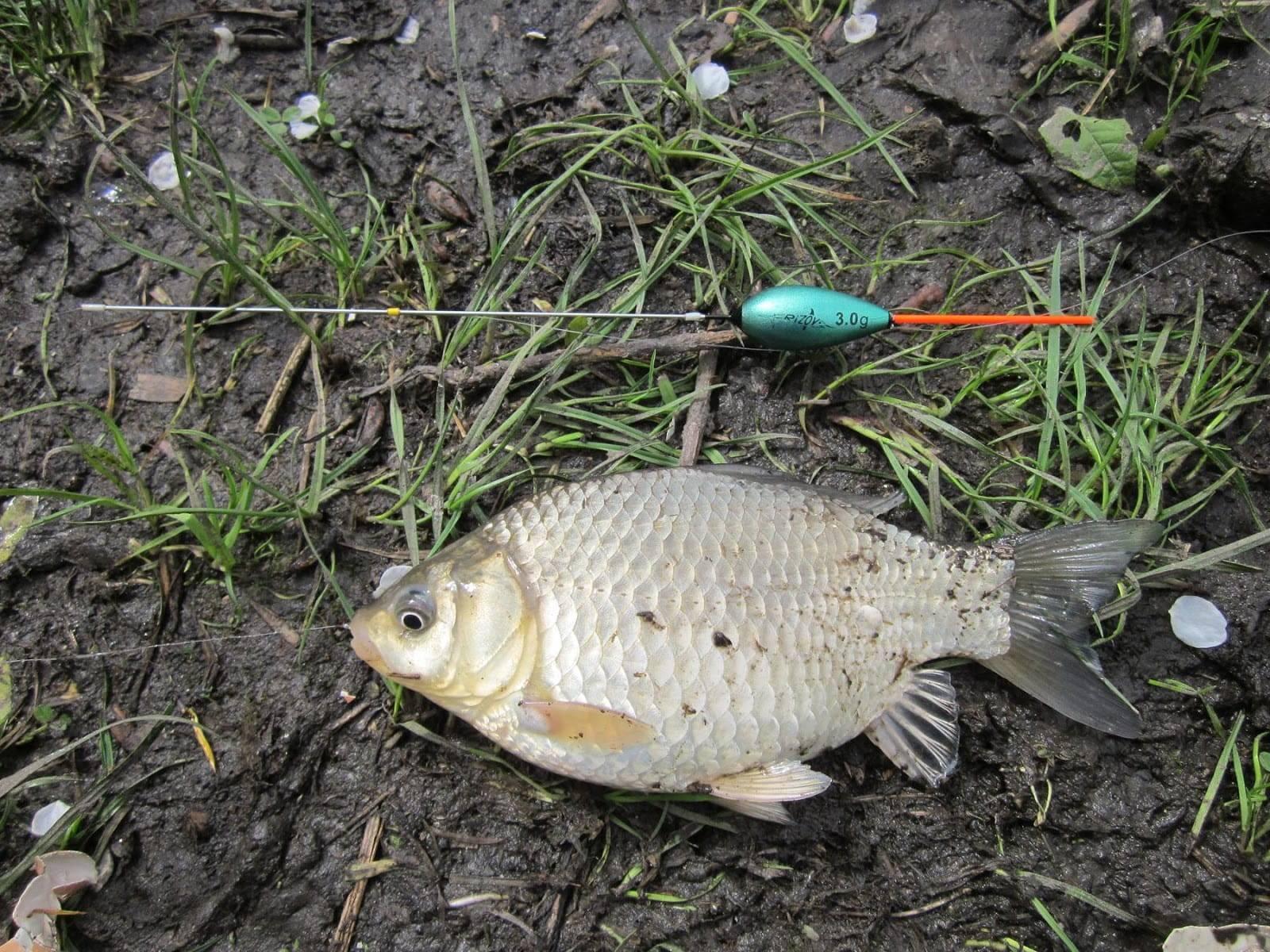20 лучших видео о рыбалке на карася