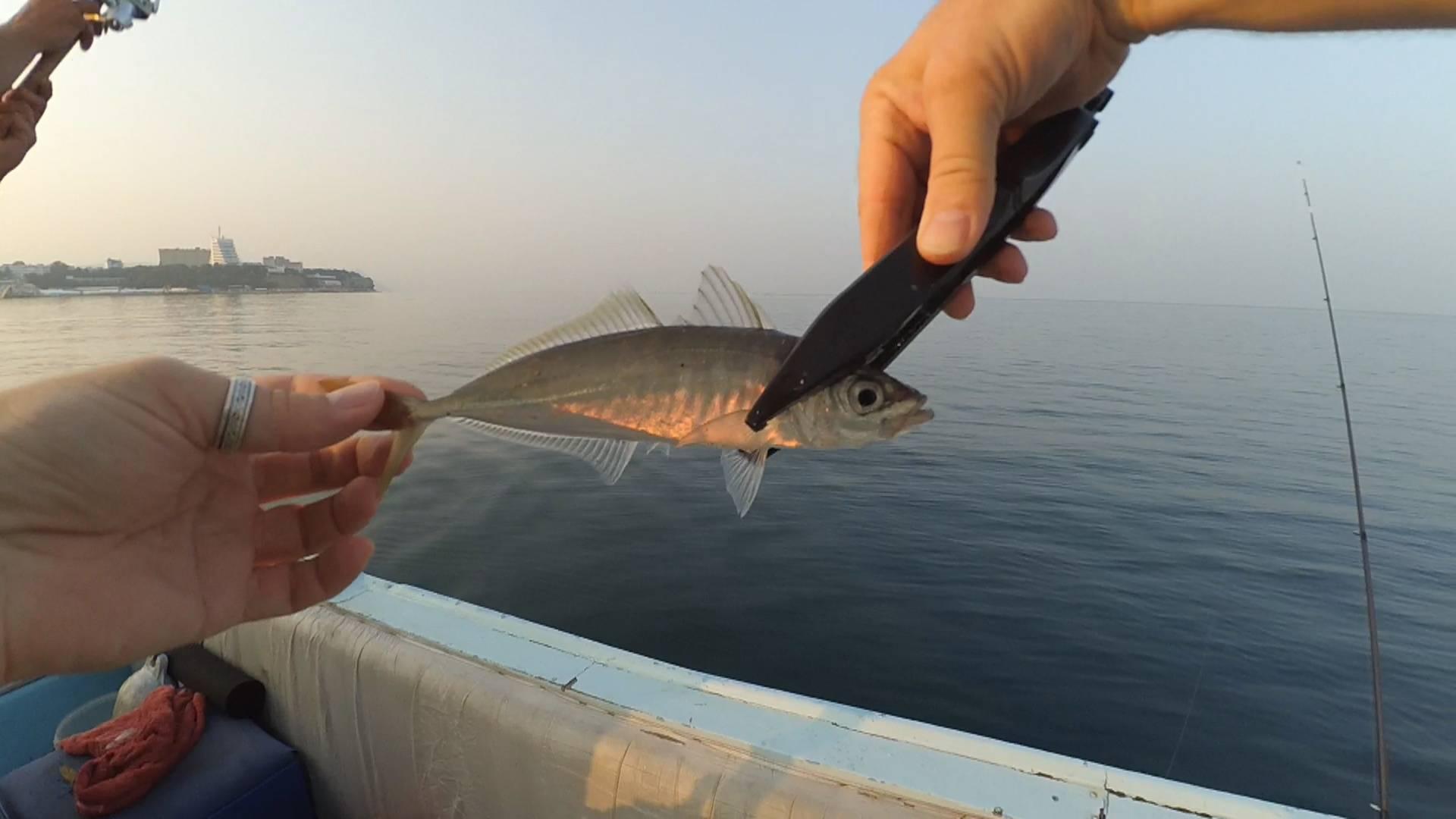 Рыбалка в геленджике: с берега и в море