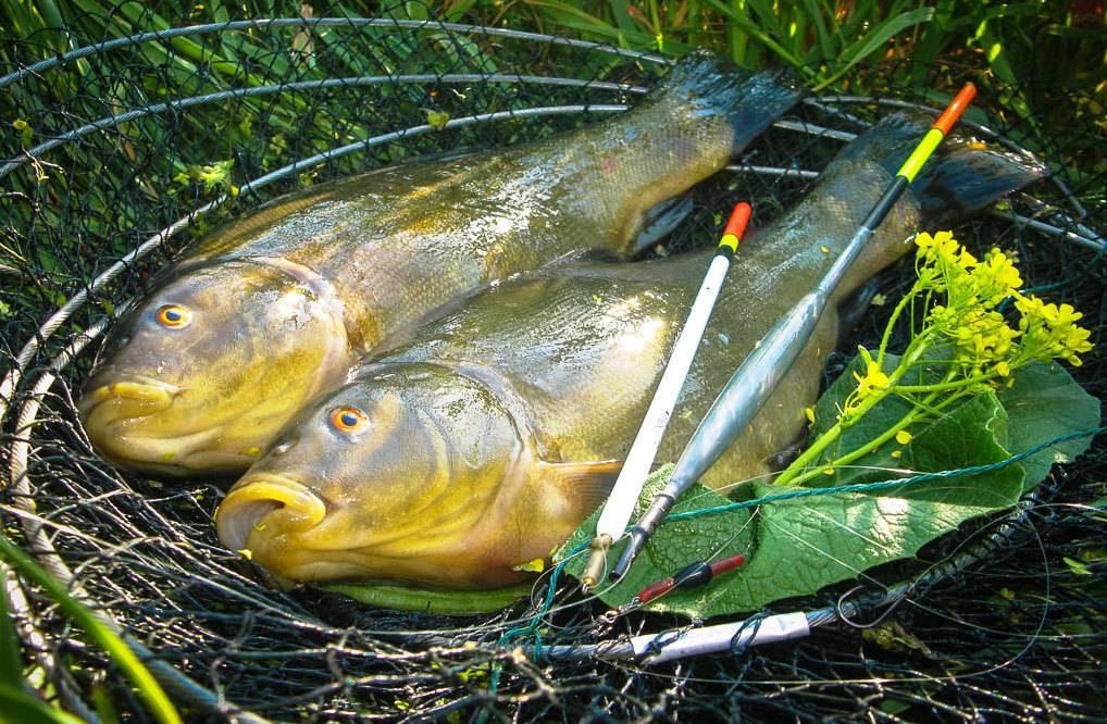 Рыбалка налинь рыбу