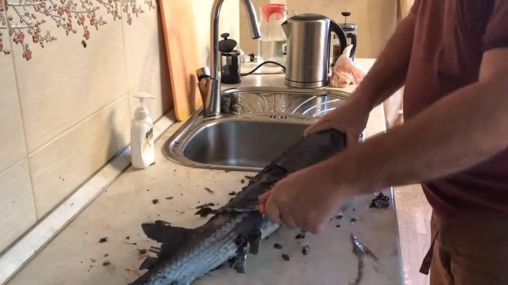 Как очистить осетра от слизи. как почистить и разделать стерлядь в домашних условиях