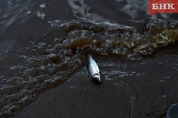 Сообщества › Охота и Рыбалка › Блог › Сплав июнь 2019г.