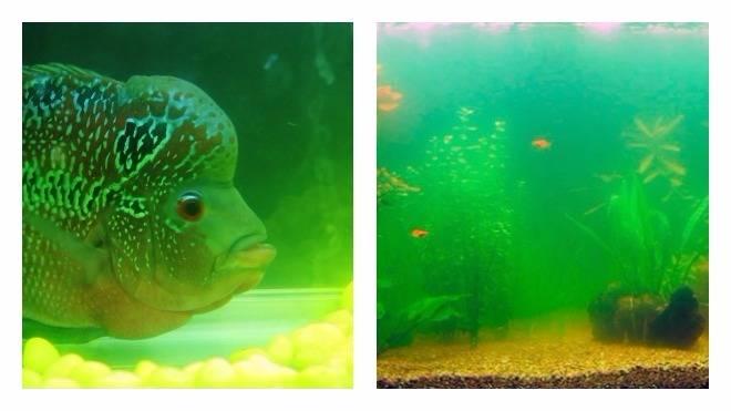 Мутная вода в аквариуме может убить обитателей! что делать, чтоб жидкость снова стала кристально чистой?