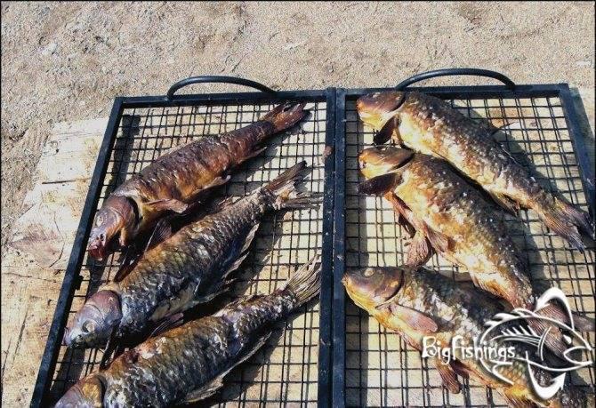 Рыбалка в «три пескаря» в деревне лыткино (пятницкое шоссе): местоположение, правила и расценки