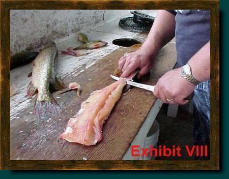 Как разделать щуку: снятие шкуры чулком со щуки, разделка на филе для фарширования, приготовление блюд из щуки