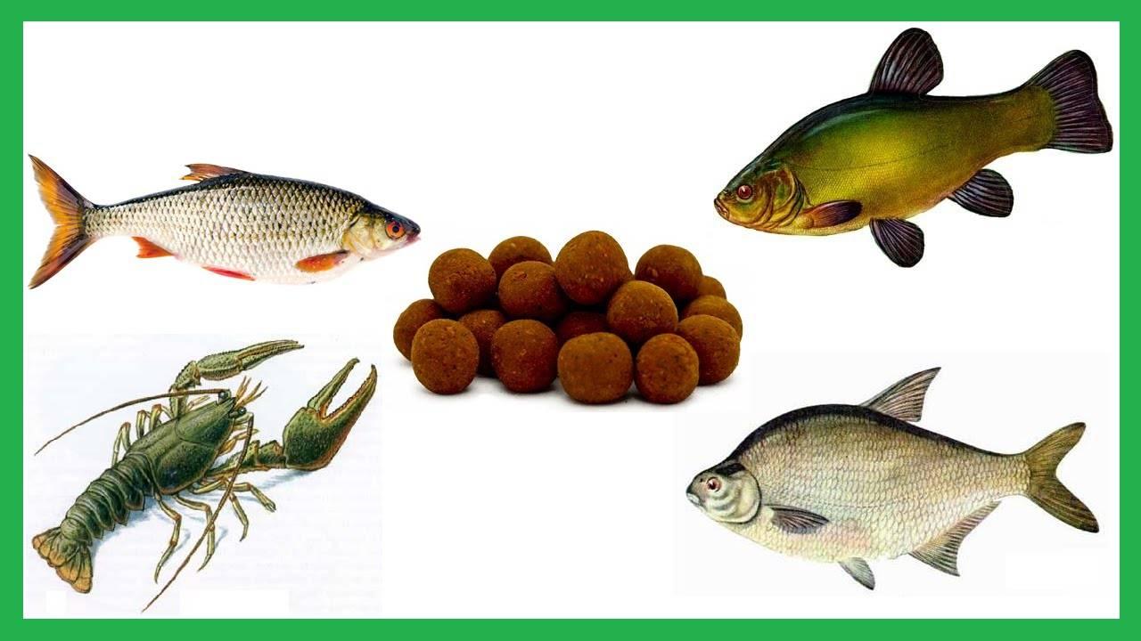 Как сделать тесто для зимней рыбалки своими руками