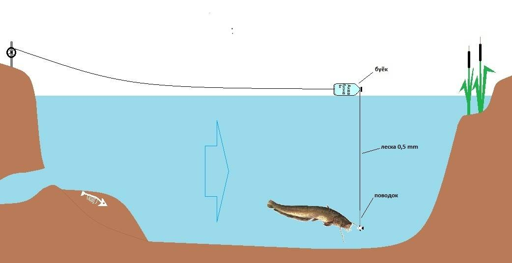 Ловля судака на живца с берега, оснастка для рыбалки на живца