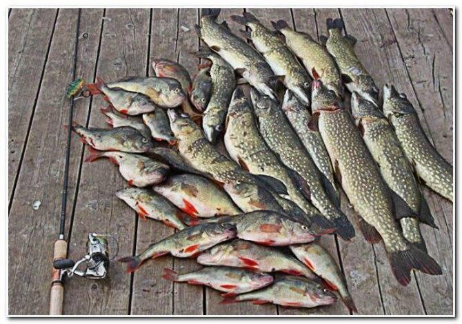 Места для рыбалки в астраханской области – платная и бесплатная рыбалка!